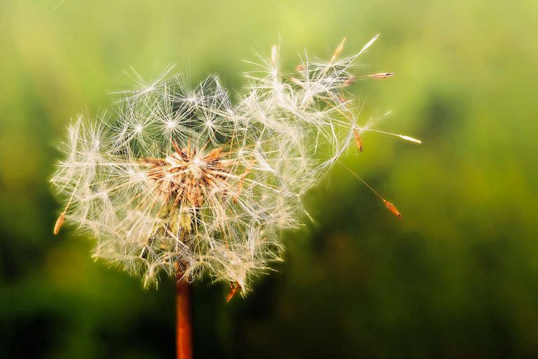 Allergie stagionali: i consigli del farmacista